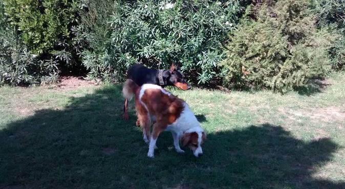 Amo l'anima del Cane, dog sitter a Sinnai, CA, Italia