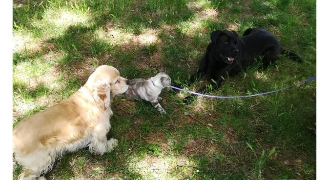 Passeggiate e giochi con Rocco, dog sitter a Rimini, RN, Italia