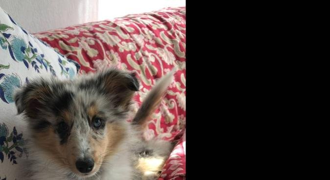Un'amica per i vostri cani !, dog sitter a Genova