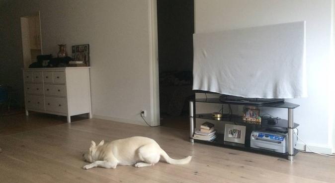 hundpassning med Vito, hundvakt nära stocholm