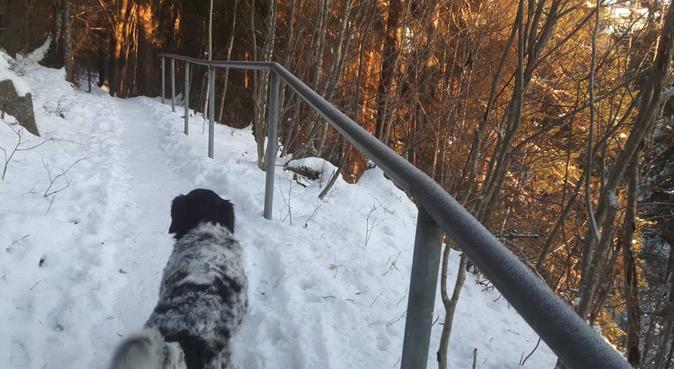 Ut på tur aldri sur:), hundepassere i Jar