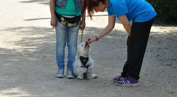 Paseadora. Cane Walk Dog. Profesionalidad, canguro en Villanueva y Geltrú