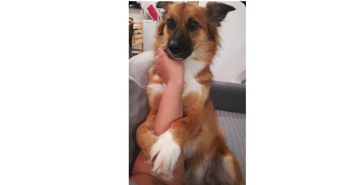 L'appart des doggos tranquilles !, dog sitter à Mons en Baroeul