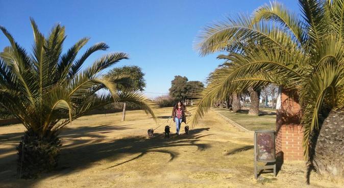paseos de perros divertidos, canguro en Huelva