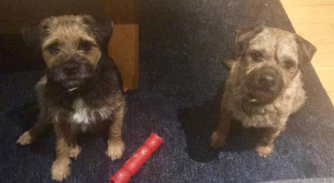Doggie wonders, dog sitter in Plymouth