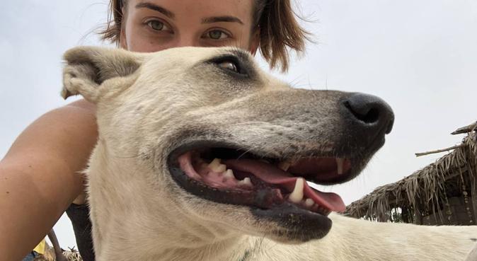 Liefde voor alle dieren❤️, hondenoppas in Amsterdam
