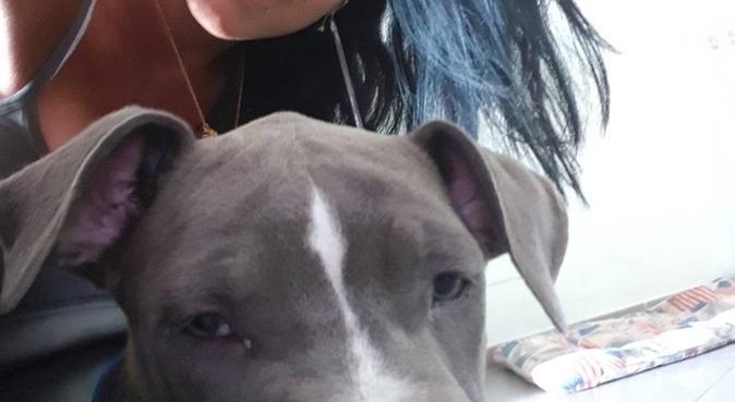 Giochi,Tanto amore e coccole per i pelosetti 💙, dog sitter a Roma