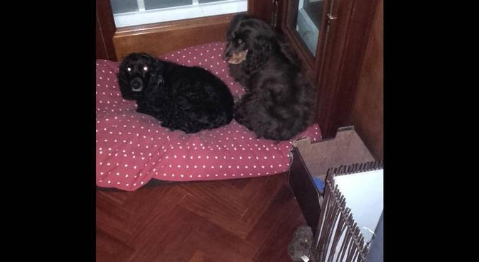 Educadora canina apasionada por los peludos de 4:), canguro en Vigo