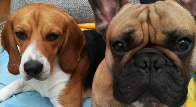 Promenades et Gardes, dog sitter à Bordeaux