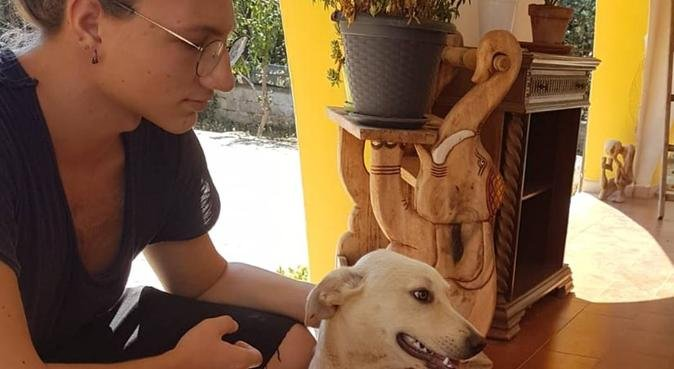 Passeggiate e tanta compagnia per i vostri amici, dog sitter a Bari