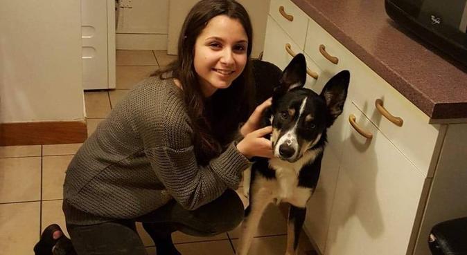 Promenade et câlin dans les Yvelines, dog sitter à Poissy, France