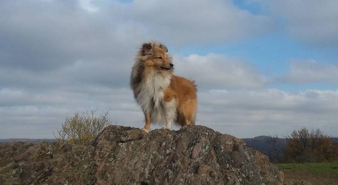 långpromenad & aktivering, hundvakt nära Bålsta