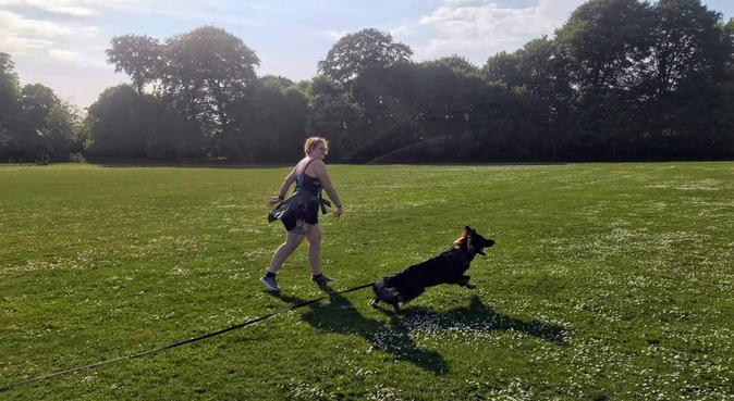 Dog lover needs dog to walk, dog sitter in Liverpool