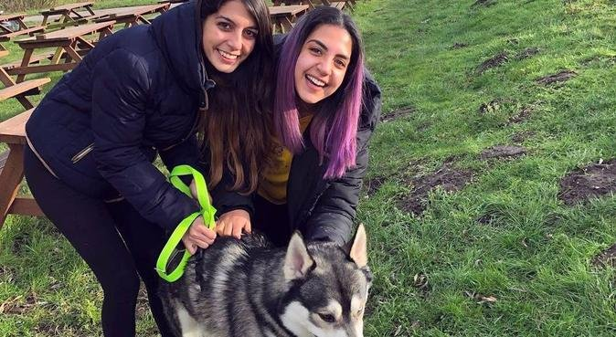 Patient and caring dog walker near West Common!, dog sitter in LINCOLN