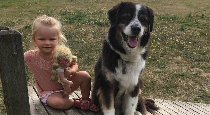 Garde chiens et Nac, dog sitter à Vertou