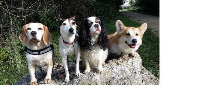 Vive les balades à la campagne avec copines sympa, dog sitter à Carrières-sous-Poissy
