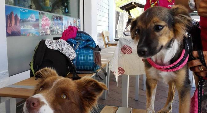 Passeggiate, coccole e tanto divertimento, dog sitter a Murano
