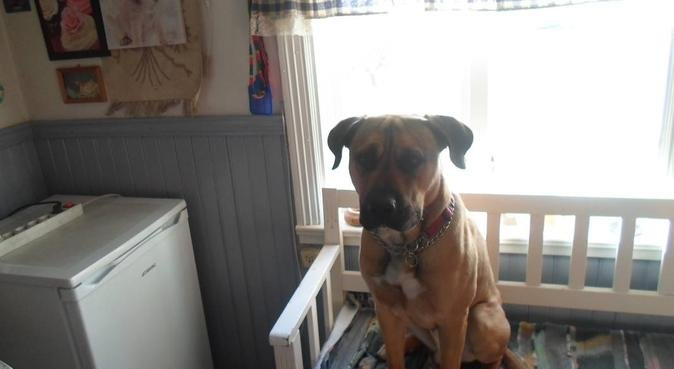 kärleksfull hundpassning i lilla silpinge, hundvakt nära ronneby
