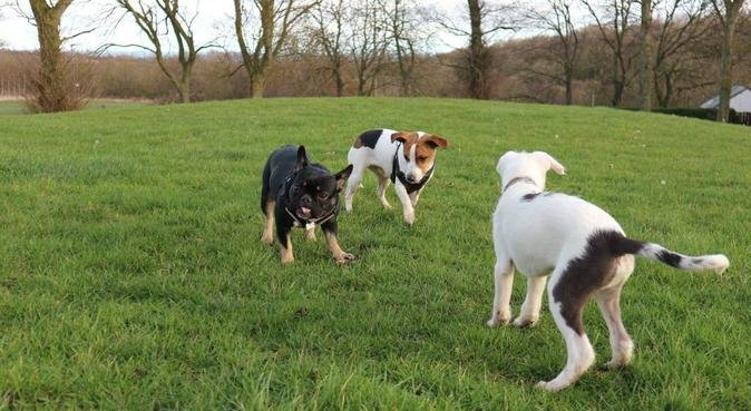 Walking and quality time, dog sitter in Durham, UK