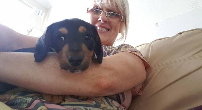 Little dog lover waiting in Waterlooville !!, dog sitter in Waterlooville