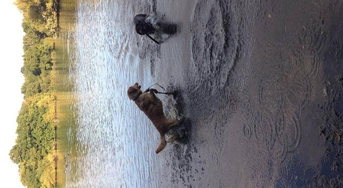 Waggy tails and muddy paws!, dog sitter in hertfordshire