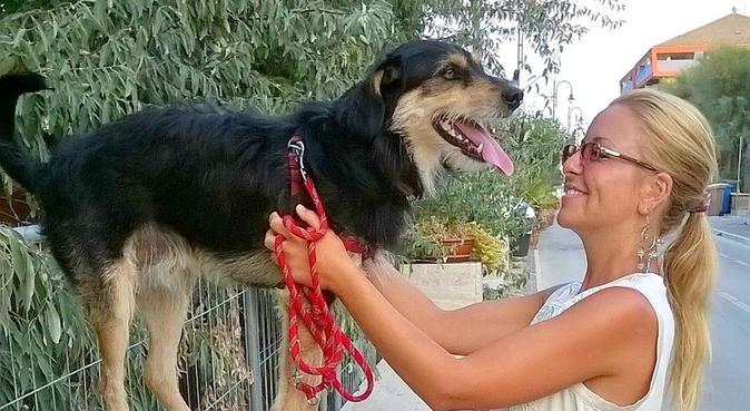 Passeggiate, dog sitter a Modena