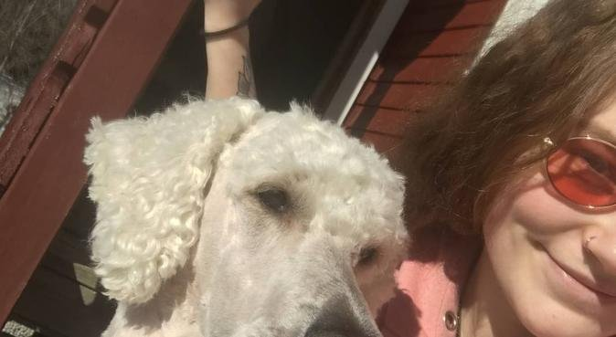 Glad i dyr og elsker å gå tur!, hundepassere i Heggedal