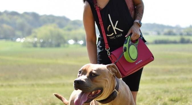 Dog walks | Dog sitting | Photography Loughton, dog sitter in Loughton