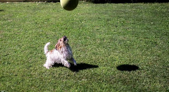 Chi porta fuori il cane oggi?, dog sitter a Cellatica