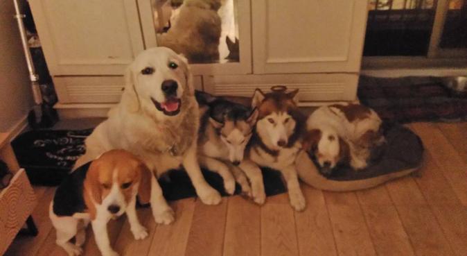 Maître de 2 huskys adorables, à votre service, dog sitter à Paris