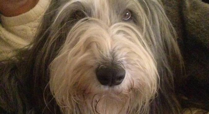 Kärleksfull hundälskande tjej i Hornstull, hundvakt nära Stockholm