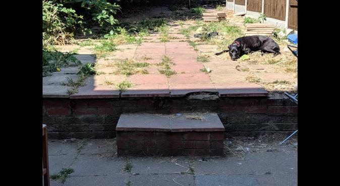 Trusted dog walker & owner, dog sitter in London