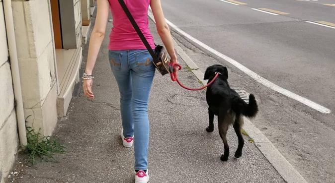Amore e passeggiate con i nostri amici pelosi., dog sitter a Bologna