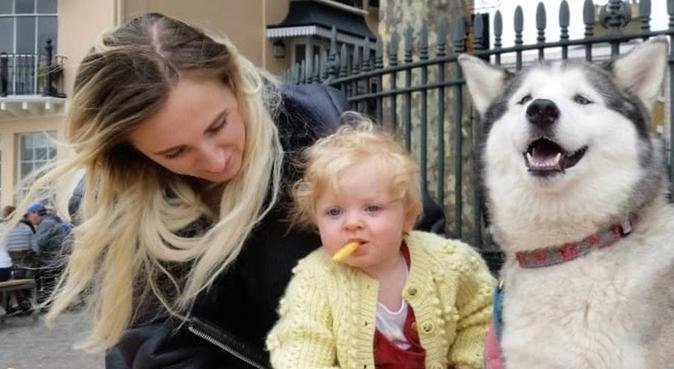 Your dog, my dog., dog sitter in London