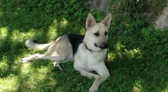 Promenade et garderie de chien, dog sitter à Saint Nazaire les Eymes