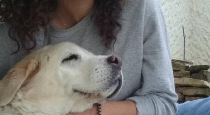 Pour l'amour des toutous, dog sitter à Tours