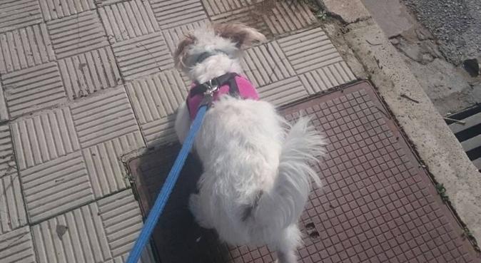 Paseo ideal para perros, canguro en Sevilla