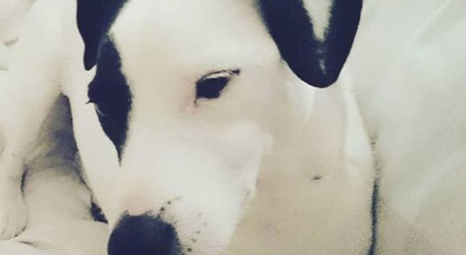 Suzes Dog Walking and Sleepovers, dog sitter in Glasgow