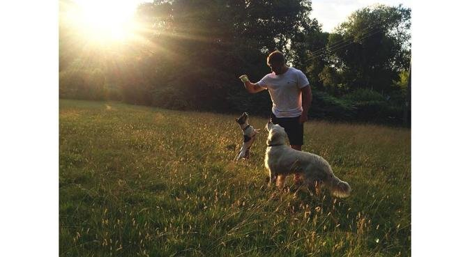 A Walk in the Park -Flexible, Reliable Dog Walker, dog sitter in Radyr