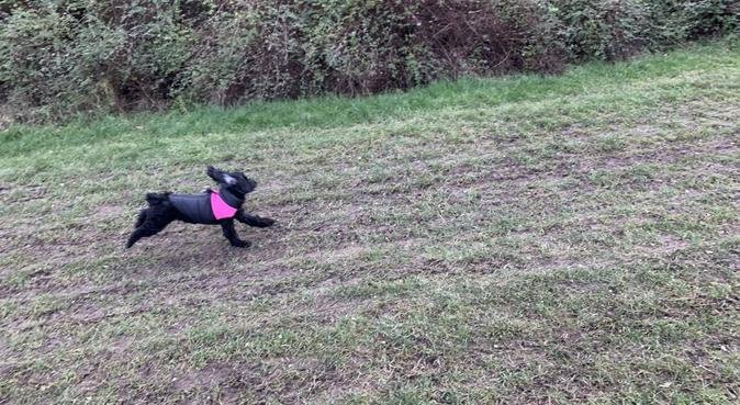 dog walking with love, attention & lots of fun, dog sitter in Birmingham