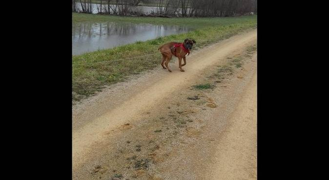 Le paradis des chiens : des jeux et des câlins !, dog sitter à Strasbourg