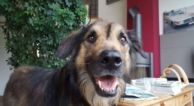 Hi! Hundefreund hier :D, Hundesitter in Köln