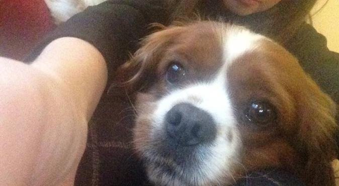 Dog bliss in Blackpool, dog sitter in Blackpool
