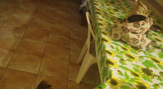 Amante degli animali, dog sitter a Palermo, PA, Italia