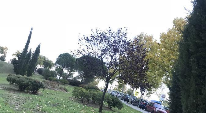 El paraíso de Claudia, canguro en Madrid, España
