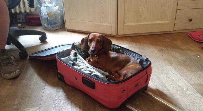 Giochi e coccole con tanti amici, dog sitter a Firenze