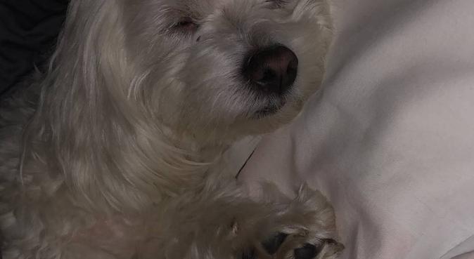 Le monde des bisouchiens, dog sitter à Colombes