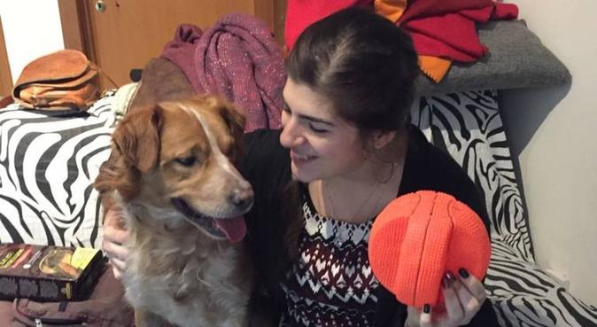 Bacini e coccoline per i pelosi ❤️, dog sitter a Bologna, BO, Italia