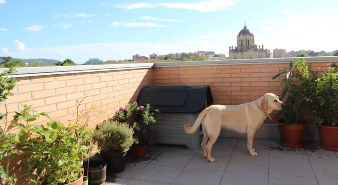 como en su propia casa, canguro en Guadalajara, España