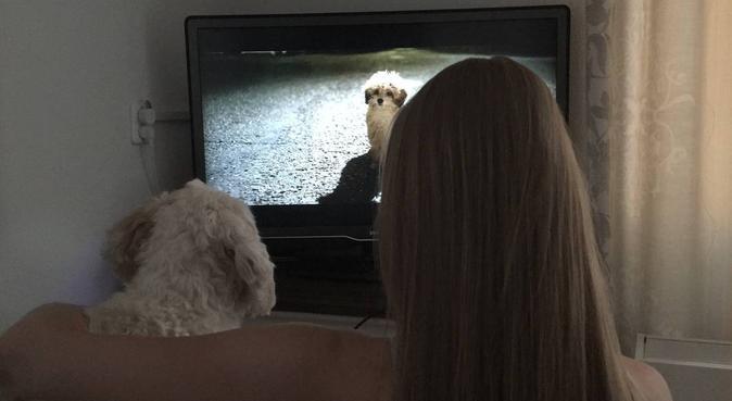 Zorgzame en liefdevolle hondenoppas Schiedam, hondenoppas in Schiedam